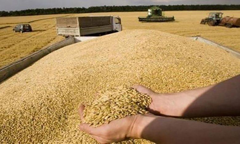 محصول قياسي من الحبوب